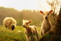 Spring Wellington Taste Real Rural Romp farm insurance blog