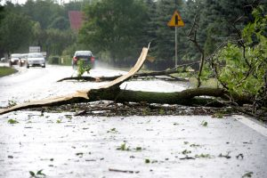 Fallen branch on road as a result of a severe weather event in Ontario